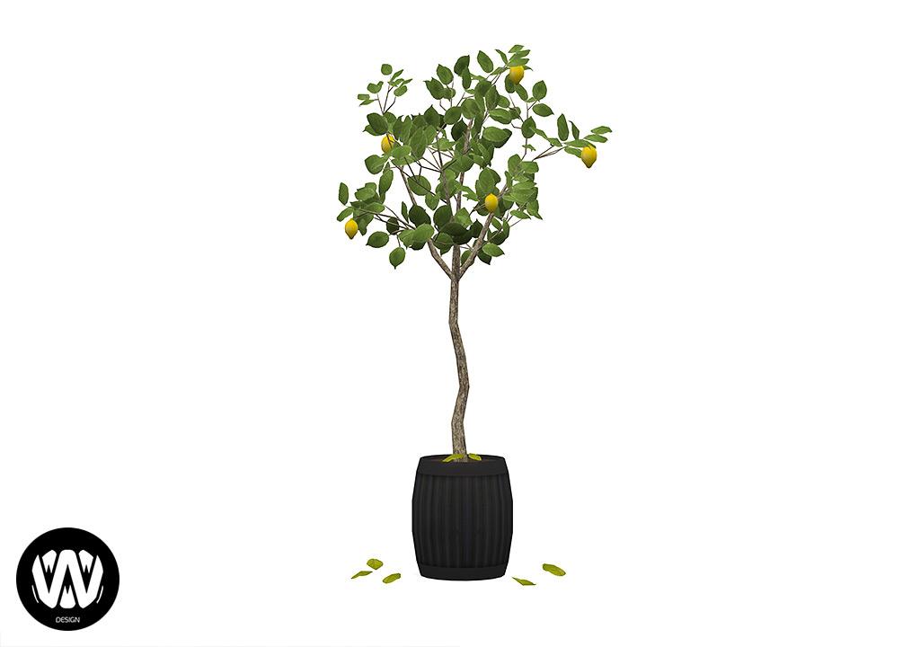 Potted Tree – Lemon