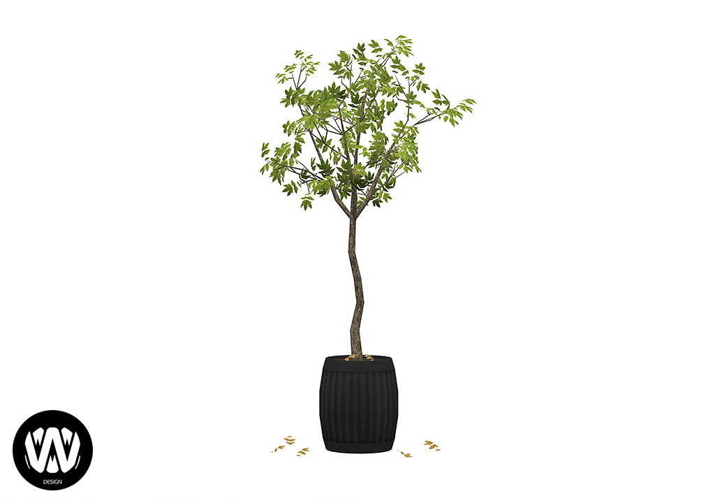 Potted Tree – Plane
