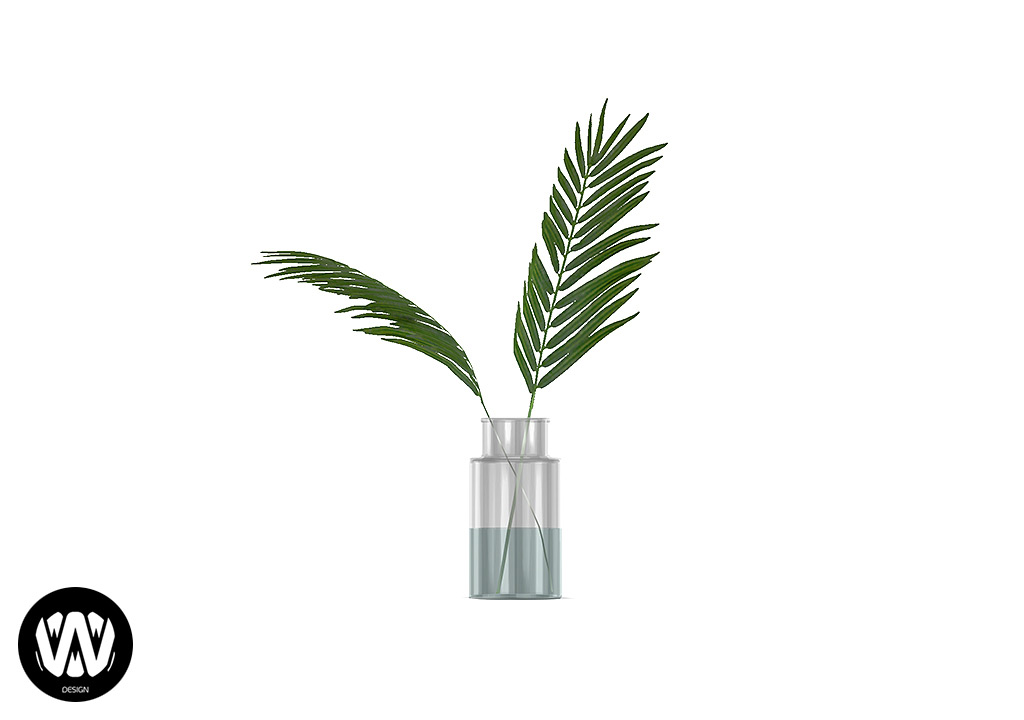 Schinus Plant