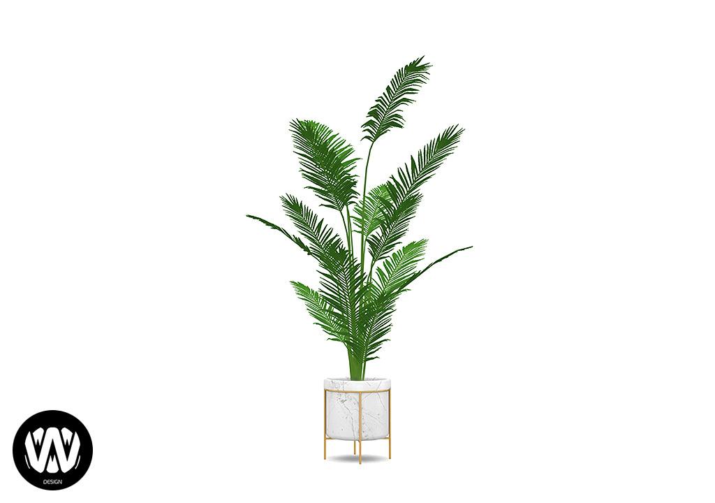 Quercus Plant