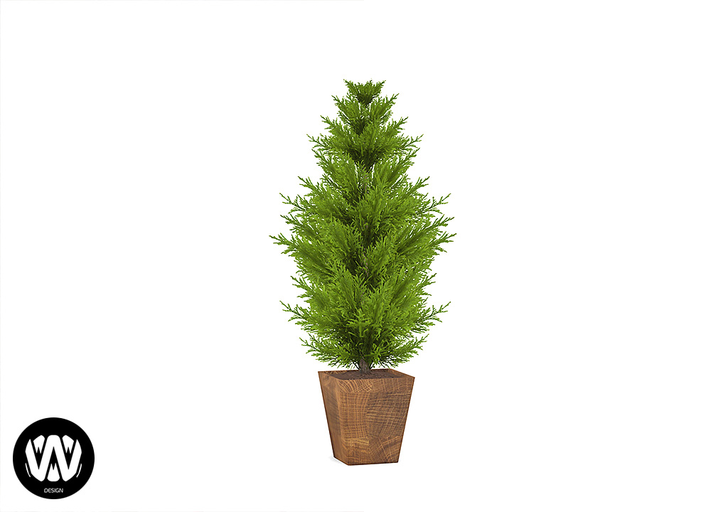 Sorbus Potted Pine Tree